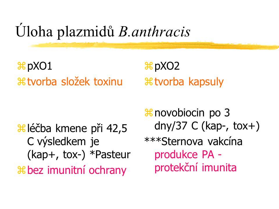 Úloha plazmidů B.anthracis zpXO1 ztvorba složek toxinu zléčba kmene při 42,5 C výsledkem je (kap+, tox-) *Pasteur zbez imunitní ochrany z pXO2 z tvorb