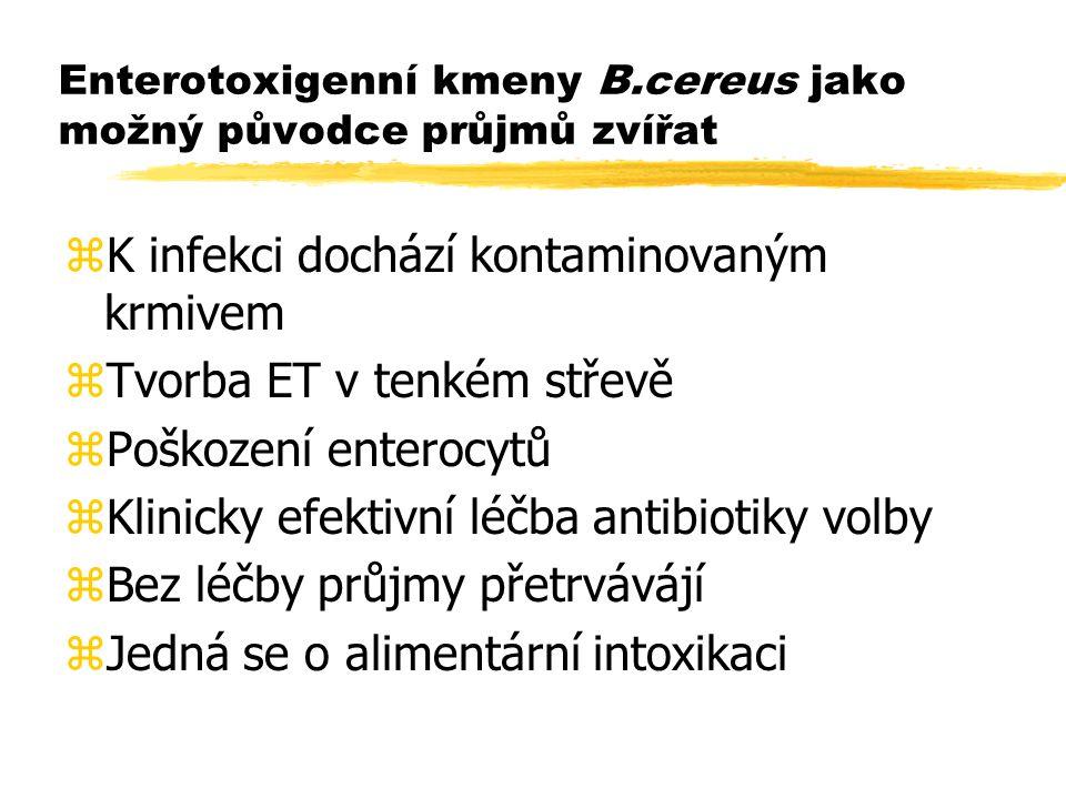 Enterotoxigenní kmeny B.cereus jako možný původce průjmů zvířat zK infekci dochází kontaminovaným krmivem zTvorba ET v tenkém střevě zPoškození entero