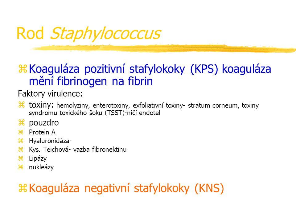 Rod Staphylococcus zKoaguláza pozitivní stafylokoky (KPS) koaguláza mění fibrinogen na fibrin Faktory virulence: ztoxiny: hemolyziny, enterotoxiny, ex