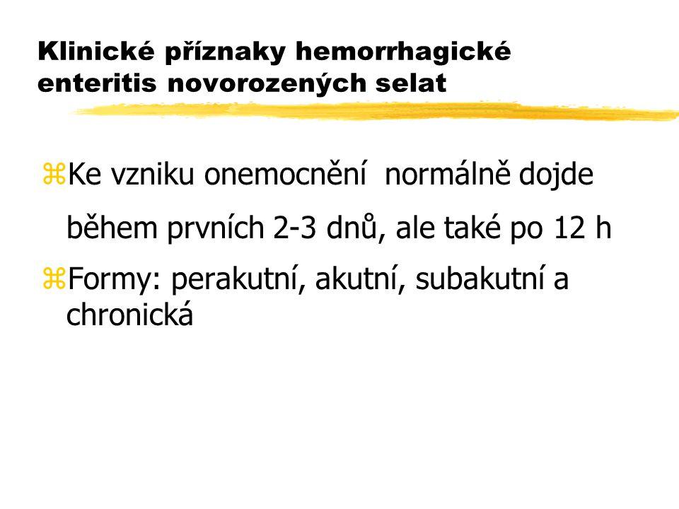 Klinické příznaky hemorrhagické enteritis novorozených selat zKe vzniku onemocnění normálně dojde během prvních 2-3 dnů, ale také po 12 h zFormy: pera