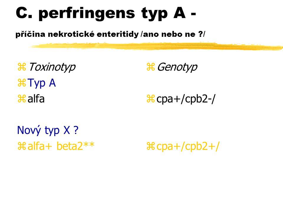 C. perfringens typ A - příčina nekrotické enteritidy /ano nebo ne ?/ zToxinotyp zTyp A zalfa Nový typ X ? zalfa+ beta2** z Genotyp z cpa+/cpb2-/ z cpa