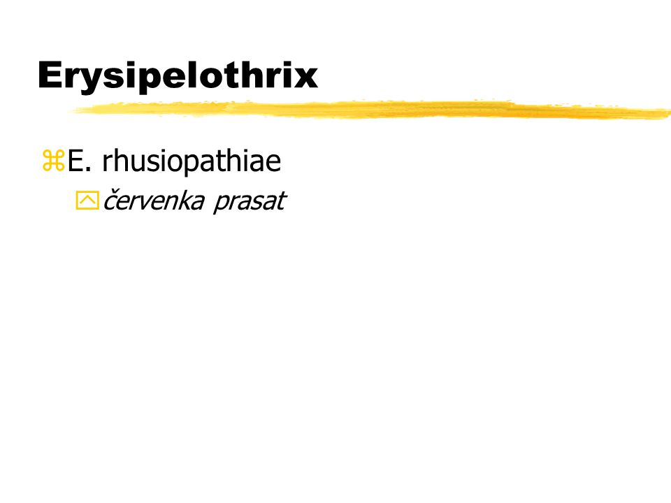 Erysipelothrix zE. rhusiopathiae yčervenka prasat
