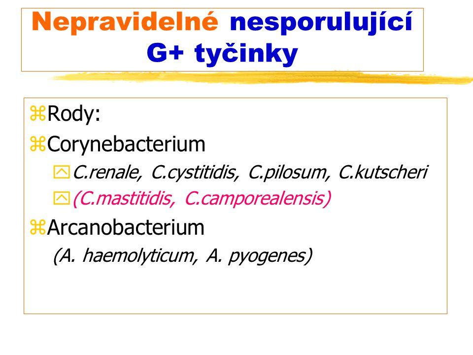 Nepravidelné nesporulující G+ tyčinky zRody: zCorynebacterium yC.renale, C.cystitidis, C.pilosum, C.kutscheri y(C.mastitidis, C.camporealensis) zArcan