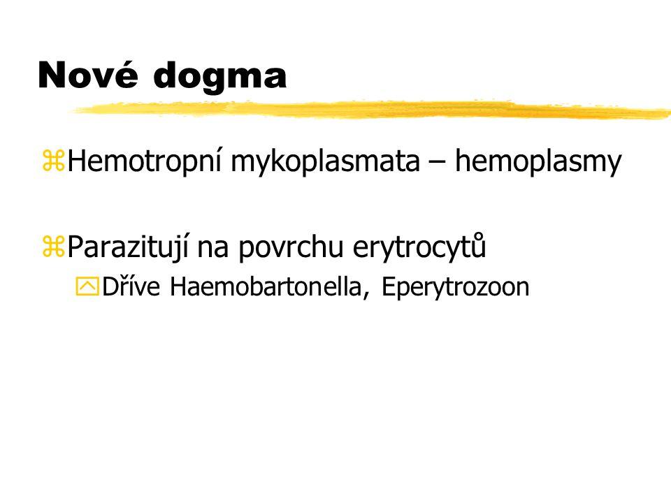 Nové dogma zHemotropní mykoplasmata – hemoplasmy zParazitují na povrchu erytrocytů yDříve Haemobartonella, Eperytrozoon