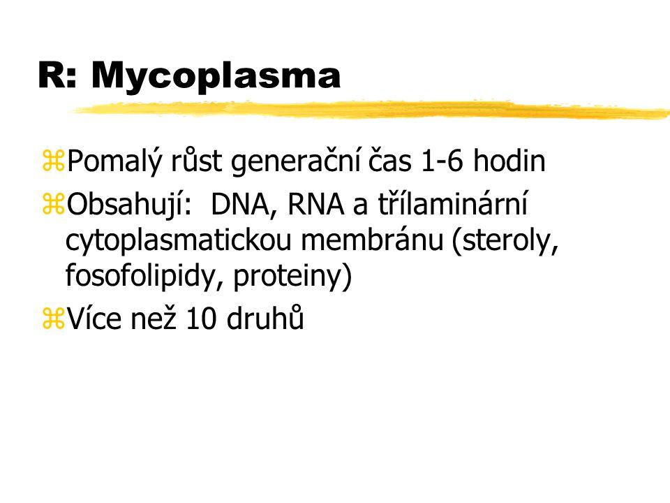 R: Mycoplasma zPomalý růst generační čas 1-6 hodin zObsahují: DNA, RNA a třílaminární cytoplasmatickou membránu (steroly, fosofolipidy, proteiny) zVíc