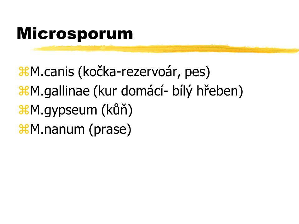 Microsporum zM.canis (kočka-rezervoár, pes) zM.gallinae (kur domácí- bílý hřeben) zM.gypseum (kůň) zM.nanum (prase)