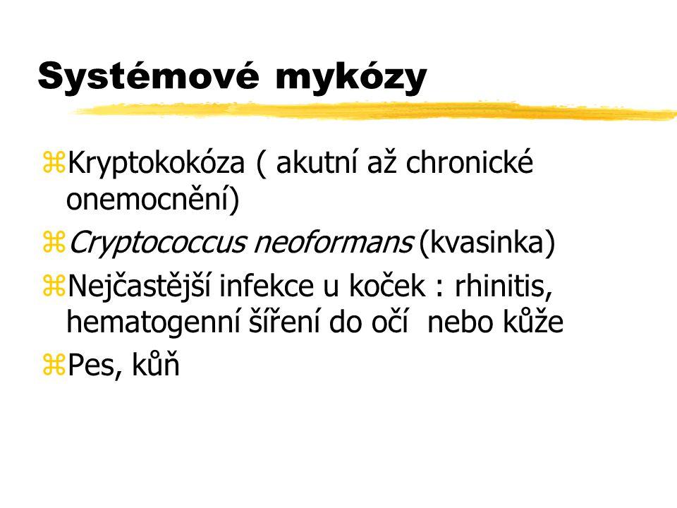 Systémové mykózy zKryptokokóza ( akutní až chronické onemocnění) zCryptococcus neoformans (kvasinka) zNejčastější infekce u koček : rhinitis, hematoge