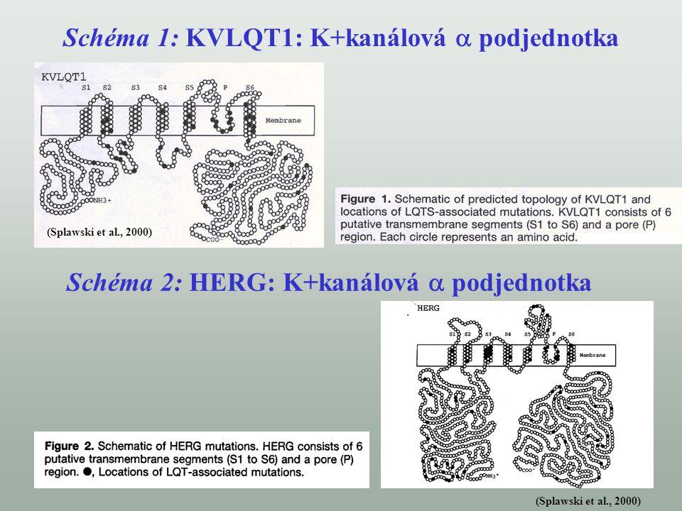 Schéma 1: Iontový K + kanál složený z proteinu KVLQT1 a minK Schéma 2: Iontový K + kanál HERG Kanál obsahuje 4 KVLQT1 podjednotky z nichž každá má 6 transmembránových segmentů (S1-S6) a oblast póru (P) tvořící funkční kanál HERG protein obsahuje 6 transmembránových jednotek, oblast póru(P) a nukleotid vázající domény (cNBD) Převzato z: Wang, Q.