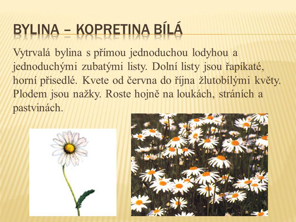 Vytrvalá bylina s přímou jednoduchou lodyhou a jednoduchými zubatými listy. Dolní listy jsou řapíkaté, horní přisedlé. Kvete od června do října žlutob