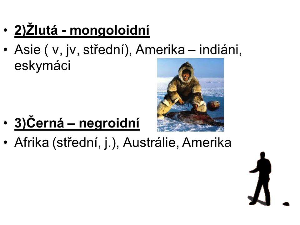 2)Žlutá - mongoloidní Asie ( v, jv, střední), Amerika – indiáni, eskymáci 3)Černá – negroidní Afrika (střední, j.), Austrálie, Amerika
