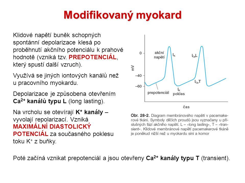 Modifikovaný myokard Klidové napětí buněk schopných spontánní depolarizace klesá po proběhnutí akčního potenciálu k prahové hodnotě (vzniká tzv.