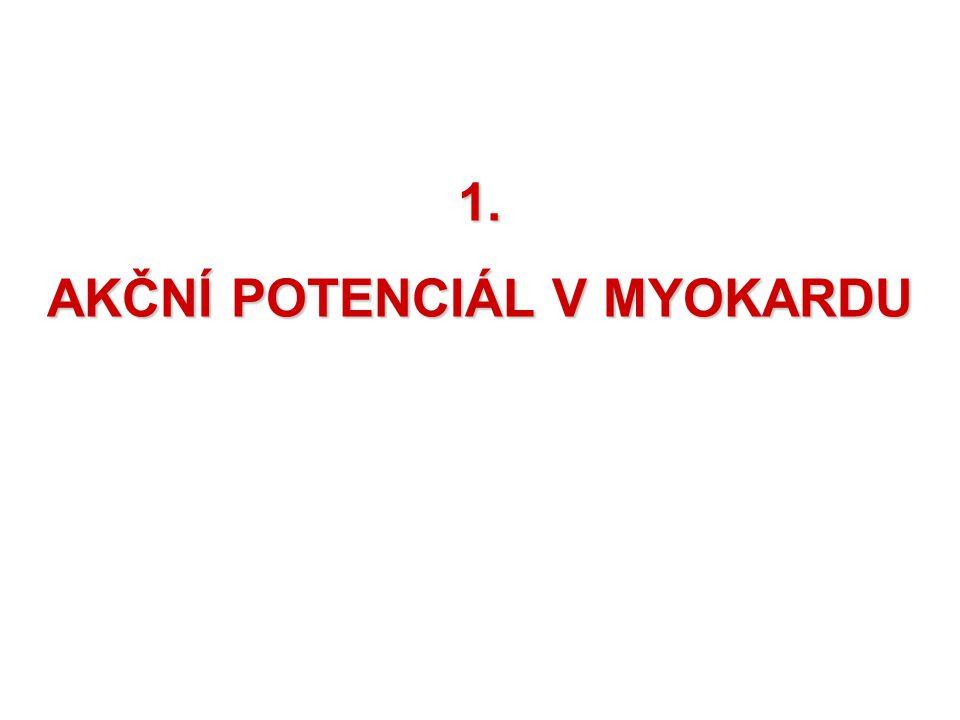 MYOKARD – SRDEČNÍ SVAL MYOKARD a)pracovní vlákna – myokard síní a komor b)modifikovaná vlákna – převodní soustava srdeční Vlákna myokardu jsou spojeny INTERKALÁRNÍMI DISKY gap junctions – šterbinová spojení vláken – šíří se tudy podráždění z vlákna na vlákno – fungují jako syncytium