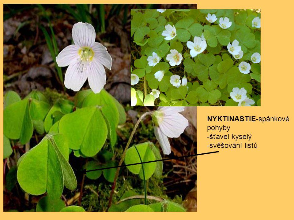 NYKTINASTIE-spánkové pohyby -šťavel kyselý -svěšování listů
