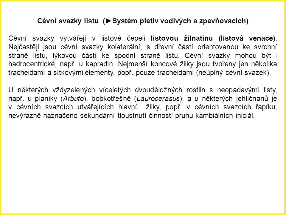Cévní svazky listu (►Systém pletiv vodivých a zpevňovacích) Cévní svazky vytvářejí v listové čepeli listovou žilnatinu (listová venace). Nejčastěji js