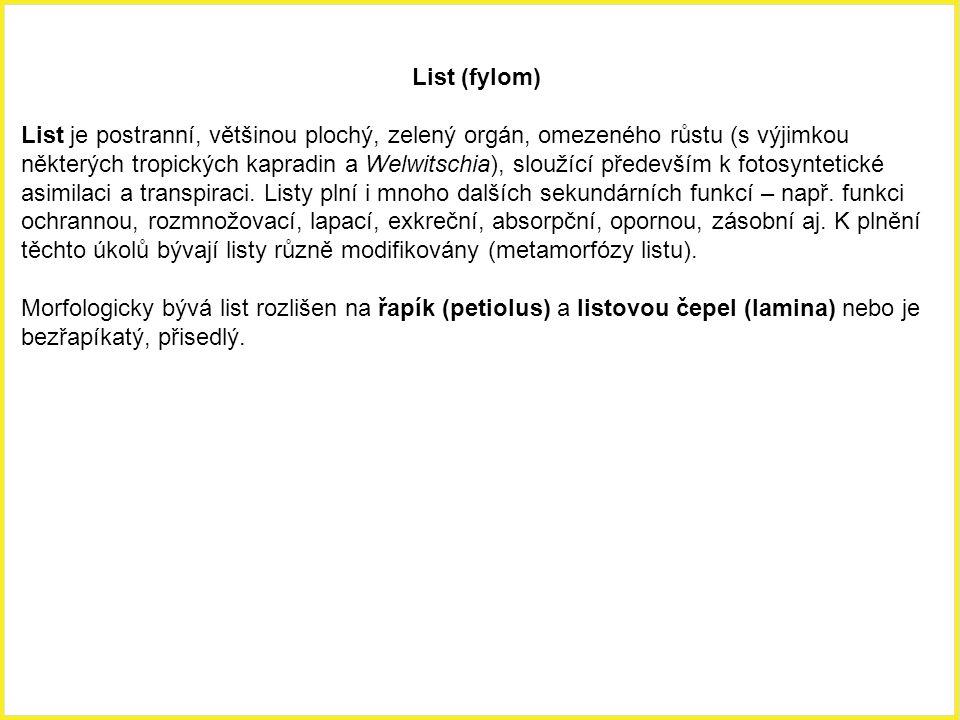 Příčný řez řapíkem listu třešně (Prunus cerasus).