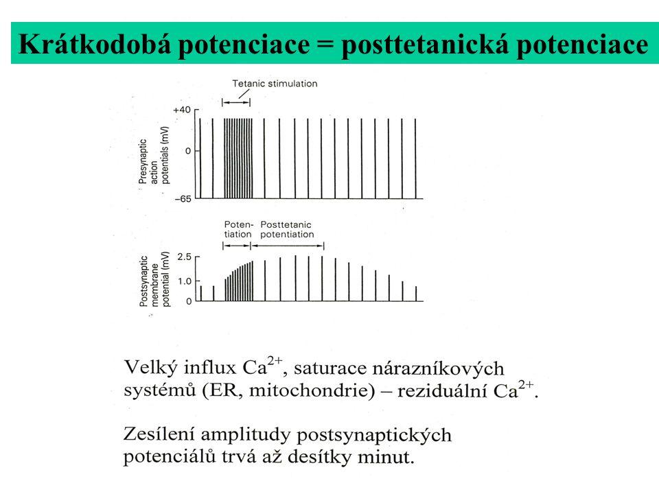 Krátkodobá potenciace homosynaptická Reziduální Ca 2+ (jen některé synapse)