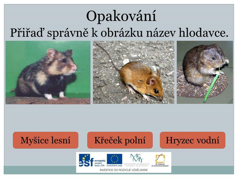 o výskyt Střední a Jižní Evropa o proslulý je svým svištivým hlasem (upozorňuje jím ostatní na hrozící nebezpečí) o potrava je rozmanitá: rostliny, pavouci, hmyz, červy, atd.