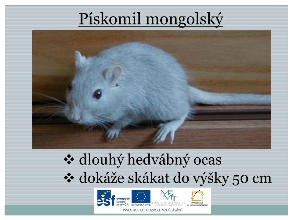 Zdroje Grand-Hamster.jpg.In: Wikipedia: the free encyclopedia [online].