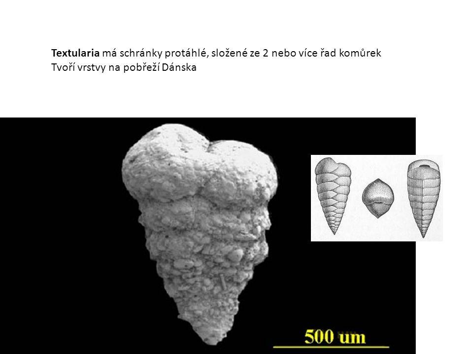 (a) Textularia, (b) Cribrostomoides, (c) Milionella, (d) Sprirolina, (e) Brizalina, (f) Pyrgo, (g) Elphidium, (h) Nonion, (i) Cibicides, (j) Globigerina, (k) Globorotalia, and (l) Elphidium (another species).