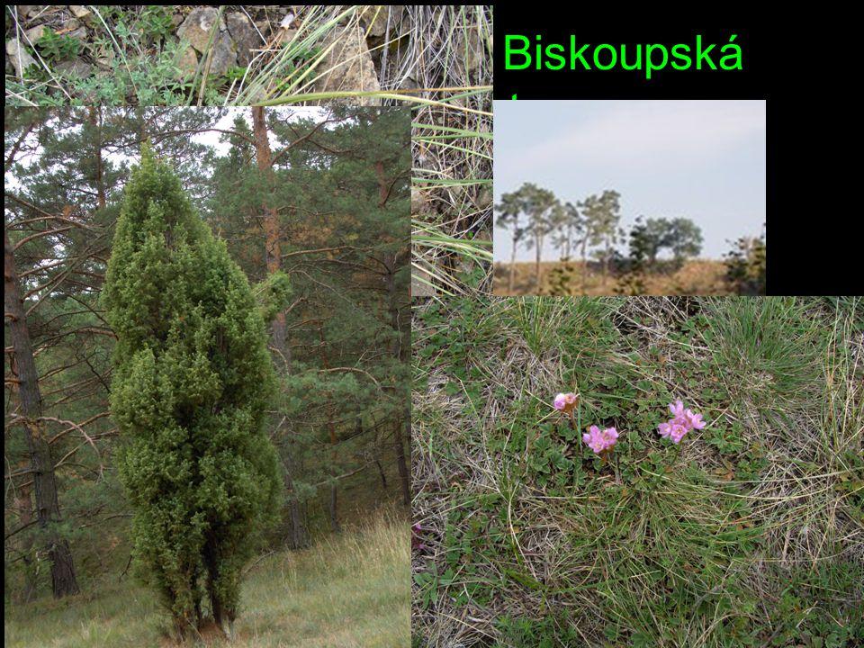Přírodní památka Biskoupská hadcová step Rozloha: 2,58 ha. Nadmořská výška: 226 - 270 m n. m. Popis lokality: Jižně exponovaný svah na levém břehu řek