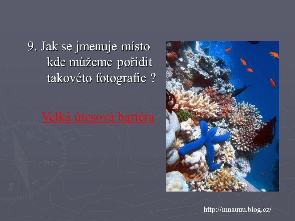 http://mnauuu.blog.cz/ 9.Jak se jmenuje místo kde můžeme pořídit takovéto fotografie .