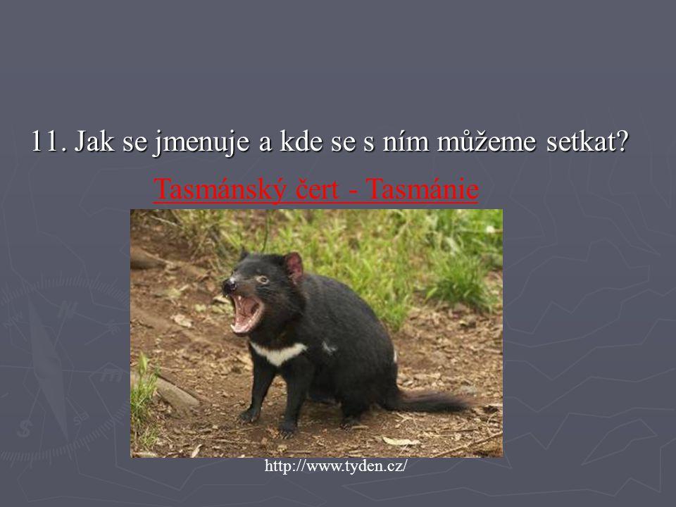 11. Jak se jmenuje a kde se s ním můžeme setkat? http://www.tyden.cz/ Tasmánský čert - Tasmánie