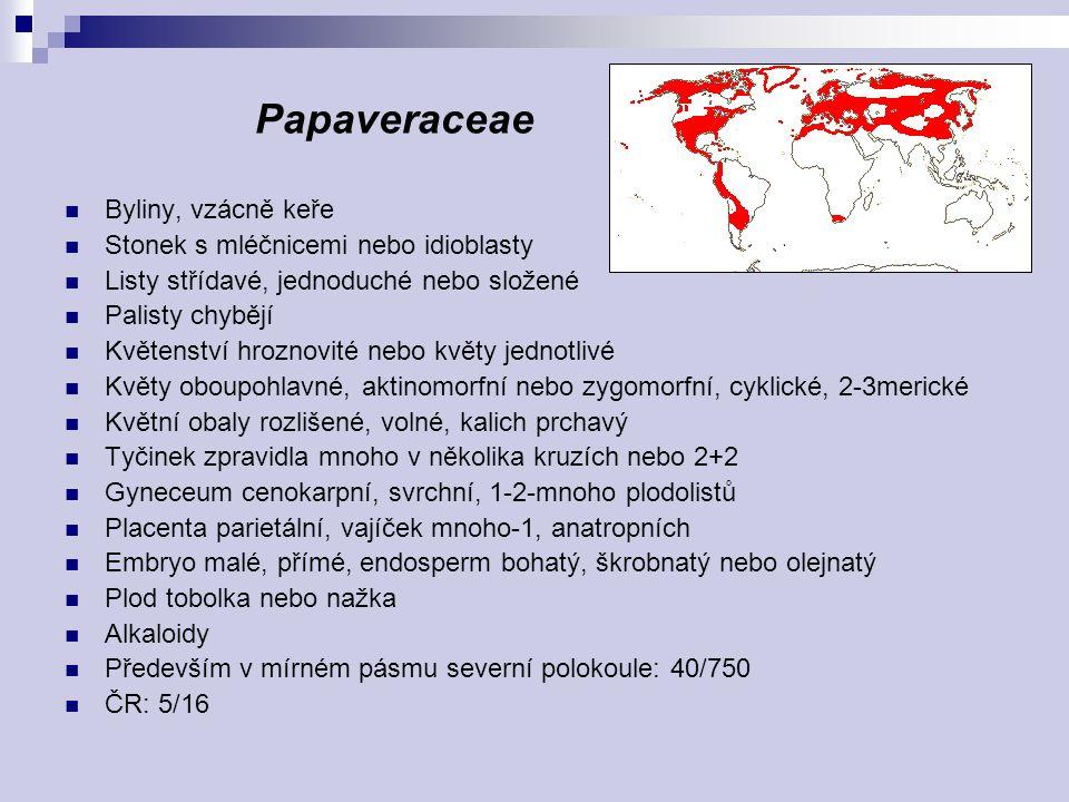 Papaveraceae Byliny, vzácně keře Stonek s mléčnicemi nebo idioblasty Listy střídavé, jednoduché nebo složené Palisty chybějí Květenství hroznovité neb
