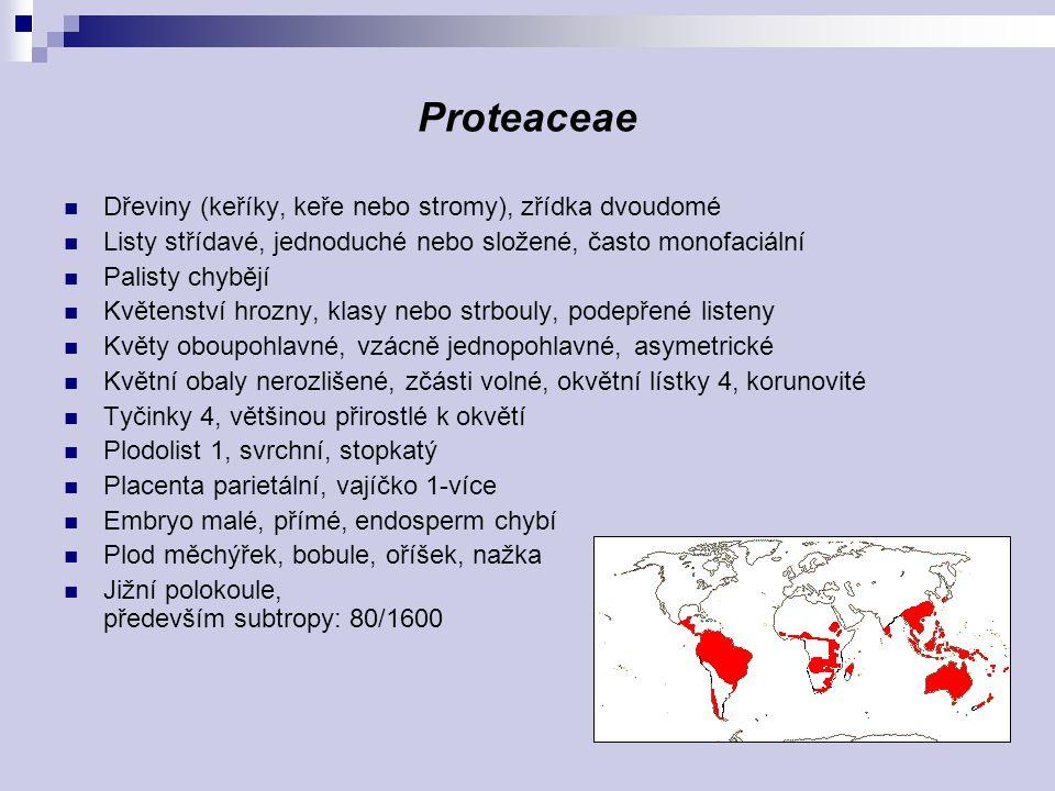Proteaceae Dřeviny (keříky, keře nebo stromy), zřídka dvoudomé Listy střídavé, jednoduché nebo složené, často monofaciální Palisty chybějí Květenství