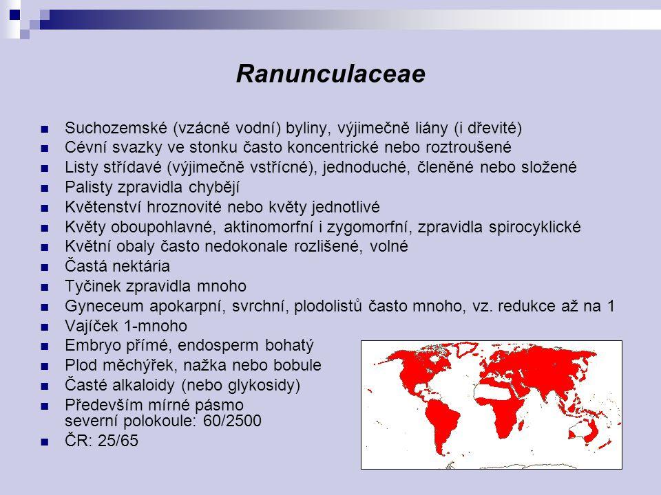 Ranunculaceae Suchozemské (vzácně vodní) byliny, výjimečně liány (i dřevité) Cévní svazky ve stonku často koncentrické nebo roztroušené Listy střídavé