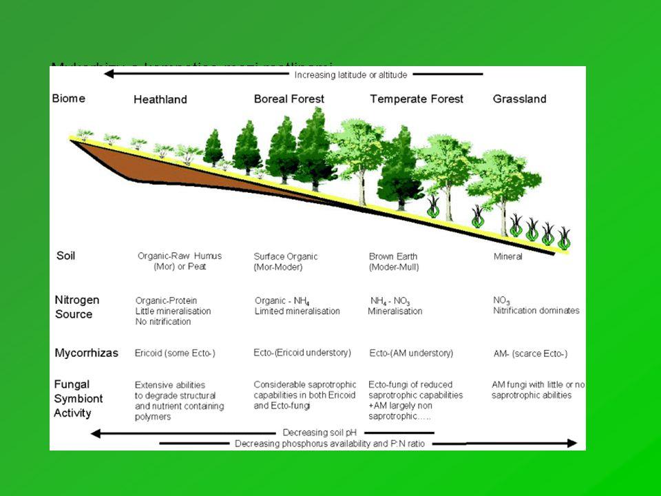 Liebigův zákon: Růst rostliny limitovaný tím faktorem prostředí který je v prostředí v největším nedostatku vzhledem k potřebám rostliny V gradientu nadmořských výšek i zeměpisných šířek se mění dostupnost dvou hlavních živin (dusík a fosfor).