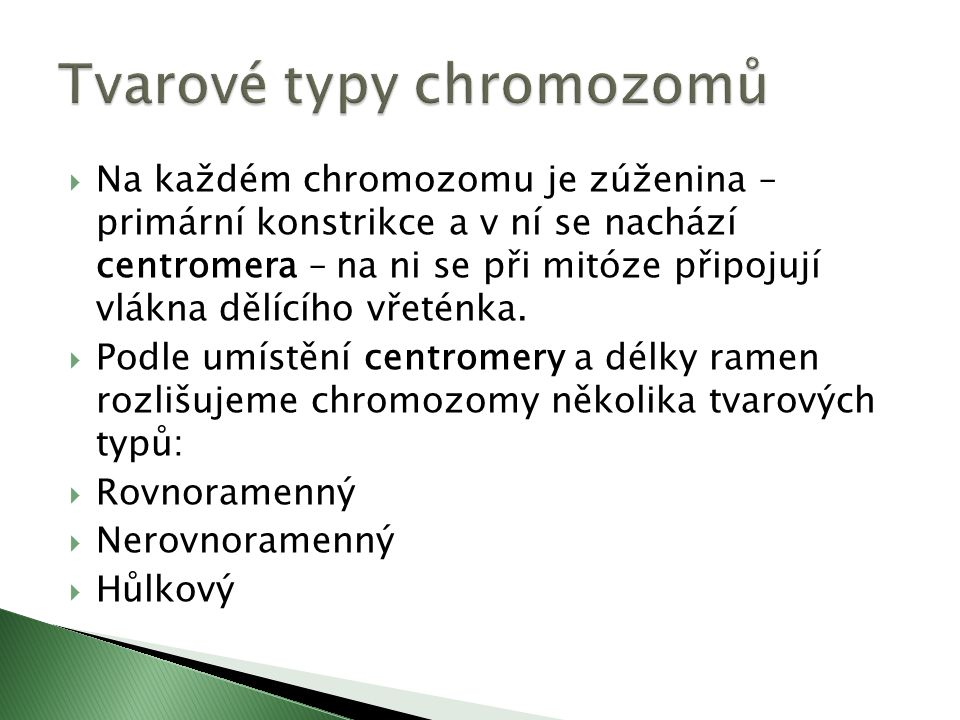  Na každém chromozomu je zúženina – primární konstrikce a v ní se nachází centromera – na ni se při mitóze připojují vlákna dělícího vřeténka.