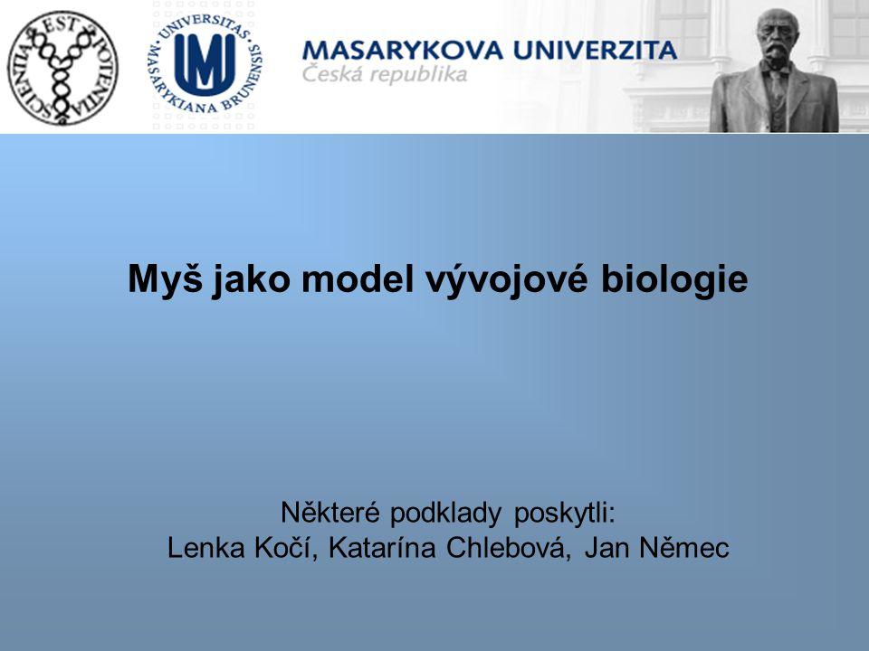 Myš jako model vývojové biologie Některé podklady poskytli: Lenka Kočí, Katarína Chlebová, Jan Němec