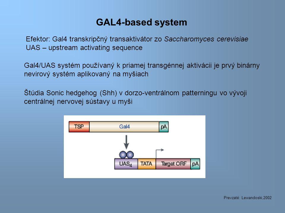 GAL4-based system Gal4/UAS systém používaný k priamej transgénnej aktivácii je prvý binárny nevirový systém aplikovaný na myšiach Prevzaté: Lewandoski,2002 Štúdia Sonic hedgehog (Shh) v dorzo-ventrálnom patterningu vo vývoji centrálnej nervovej sústavy u myši Efektor: Gal4 transkripčný transaktivátor zo Saccharomyces cerevisiae UAS – upstream activating sequence