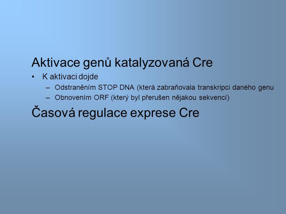 Aktivace genů katalyzovaná Cre K aktivaci dojde –Odstraněním STOP DNA (která zabraňovala transkripci daného genu –Obnovením ORF (který byl přerušen nějakou sekvencí) Časová regulace exprese Cre