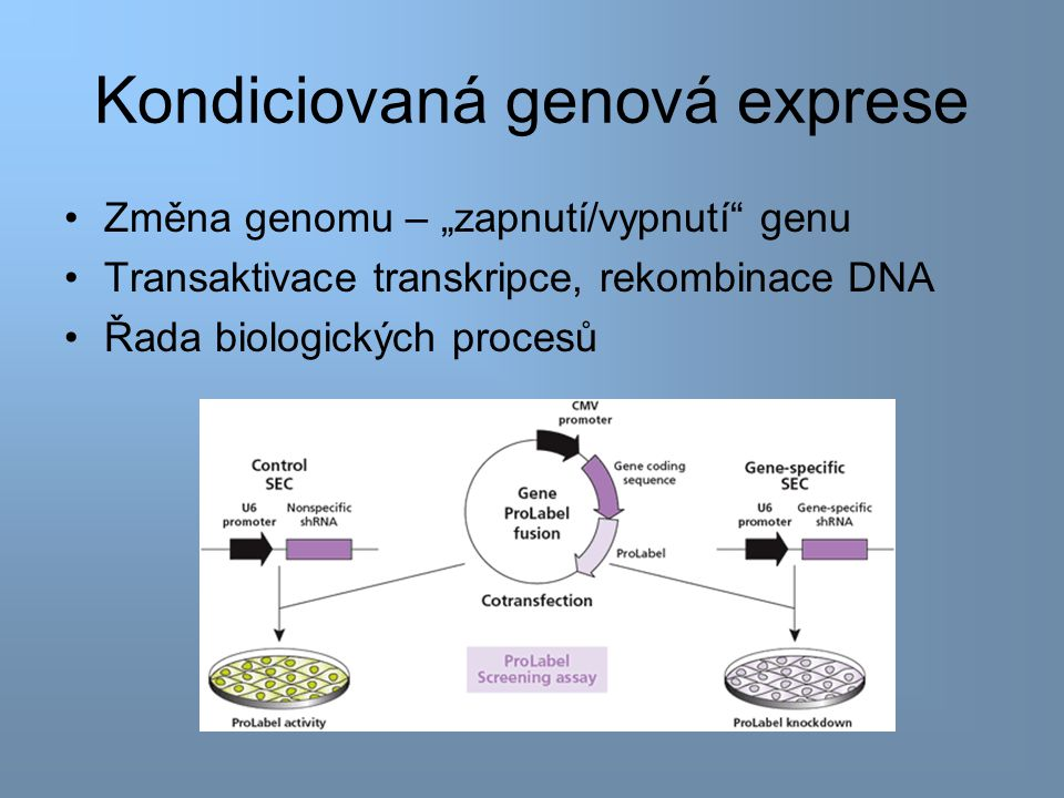 Binární transgenní systém Dříve – krátké sekvence transgenu s ovlivnitelným promotorem –Ovlivnění: těžké kovy, teplotní šoky, interferony, steroidy Krátké sekvence: pleiotropní efekty, vysoká bazální aktivita bez přítomnosti induktoru