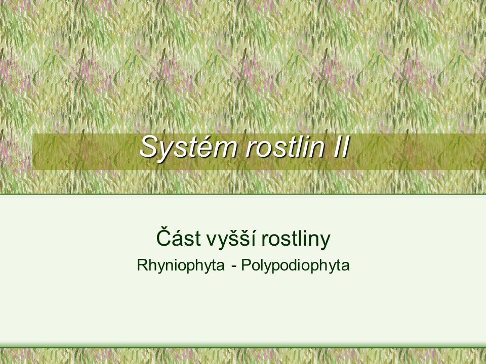 Systém rostlin II Část vyšší rostliny Rhyniophyta - Polypodiophyta