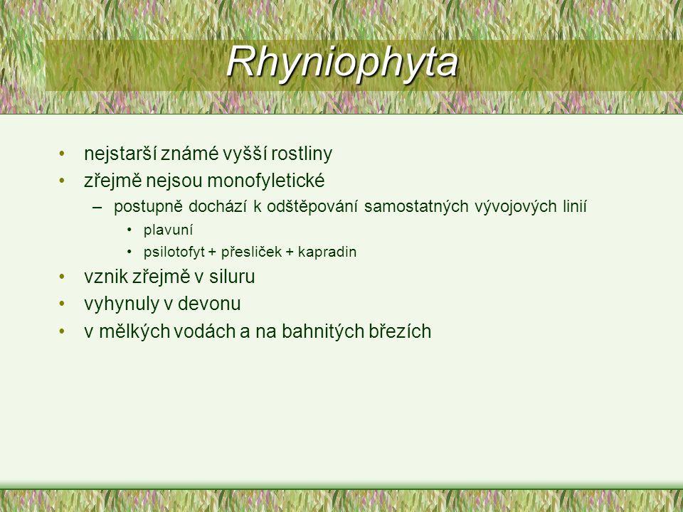 Rhyniophyta nejstarší známé vyšší rostliny zřejmě nejsou monofyletické –postupně dochází k odštěpování samostatných vývojových linií plavuní psilotofy