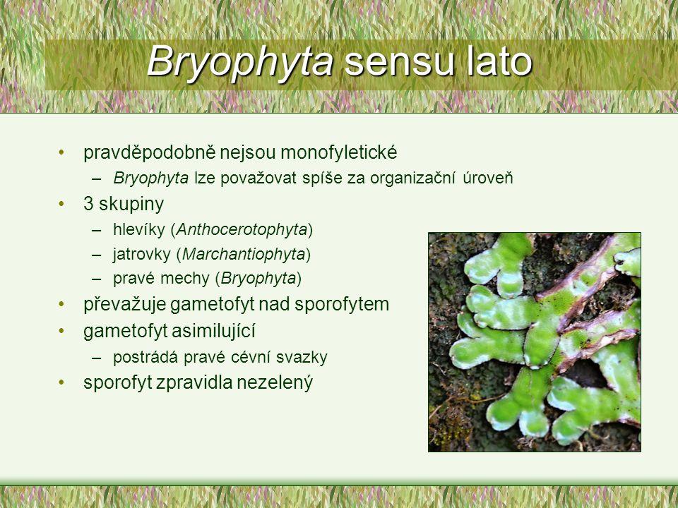 Bryophyta sensu lato pravděpodobně nejsou monofyletické –Bryophyta lze považovat spíše za organizační úroveň 3 skupiny –hlevíky (Anthocerotophyta) –ja