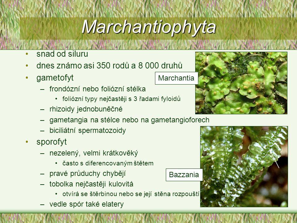 Marchantiophyta snad od siluru dnes známo asi 350 rodů a 8 000 druhů gametofyt –frondózní nebo foliózní stélka foliózní typy nejčastěji s 3 řadami fyl