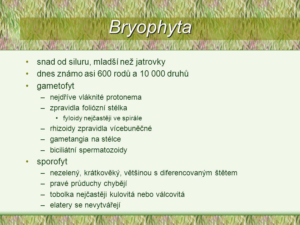 Bryophyta snad od siluru, mladší než jatrovky dnes známo asi 600 rodů a 10 000 druhů gametofyt –nejdříve vláknité protonema –zpravidla foliózní stélka