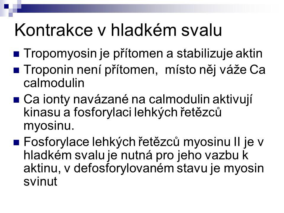 Vazivové obaly Endomysium Perimysium Epimysium Fascie Šlacha