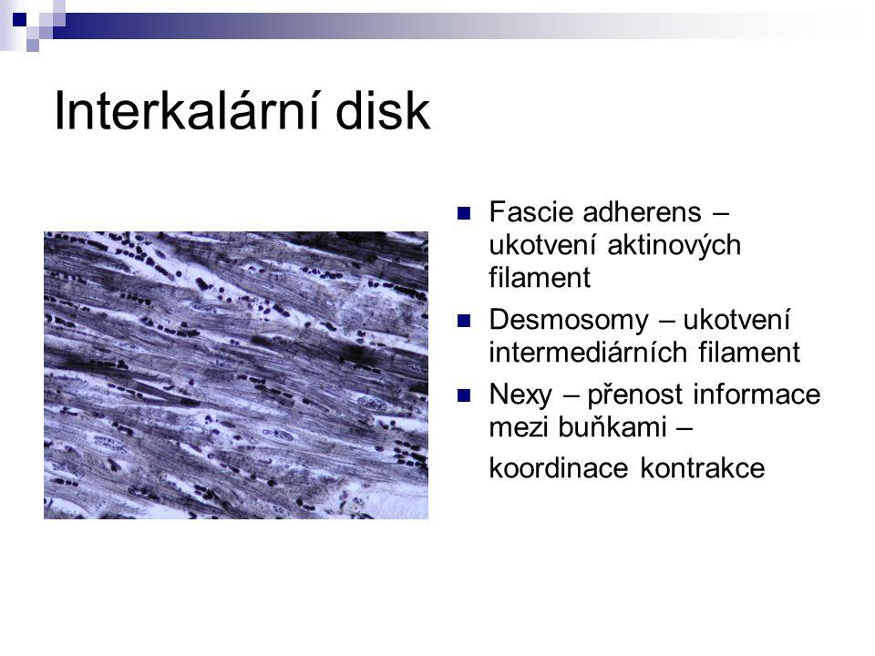 Interkalární disk Fascie adherens – ukotvení aktinových filament Desmosomy – ukotvení intermediárních filament Nexy – přenost informace mezi buňkami – koordinace kontrakce