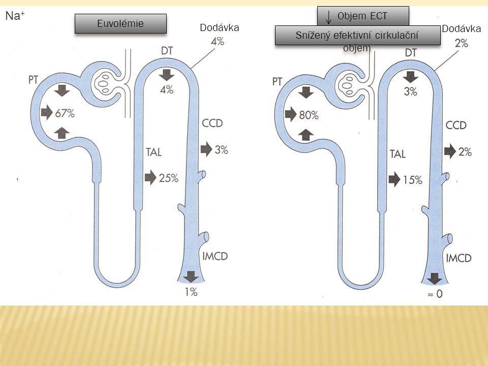 Na + Euvolémie Objem ECT Dodávka Snížený efektivní cirkulační objem