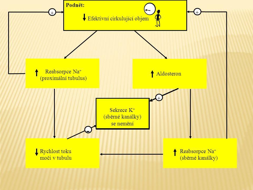 Sekrece K + Podnět: Efektivní cirkulující objem Reabsorpce Na + (proximální tubulus) Rychlost toku moči v tubulu Reabsorpce Na + (sběrné kanálky) Aldo
