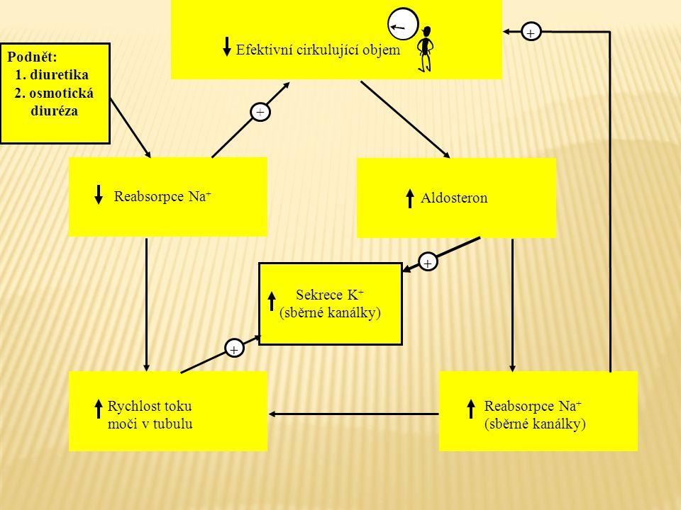 Efektivní cirkulující objem Reabsorpce Na + Rychlost toku moči v tubulu Reabsorpce Na + (sběrné kanálky) Aldosteron Sekrece K + (sběrné kanálky) + + +