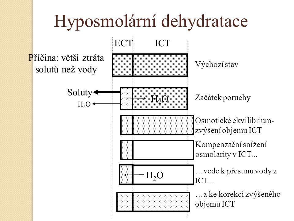 Hyposmolární dehydratace H2OH2O H2OH2O Příčina: větší ztráta solutů než vody ECT ICT Výchozí stav Začátek poruchy Osmotické ekvilibrium- zvýšení objem