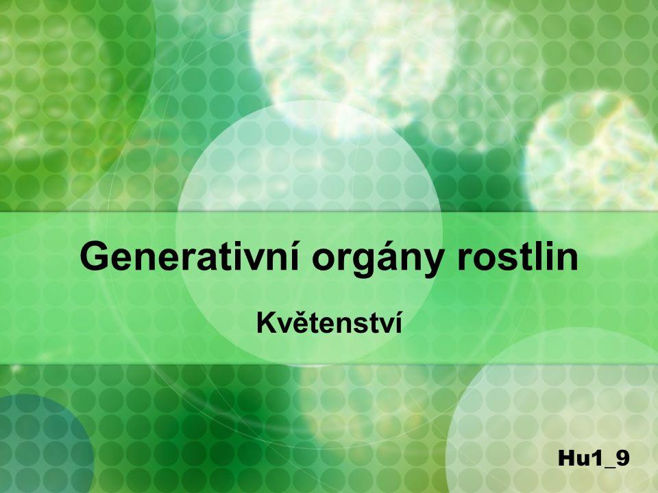 Generativní orgány rostlin Květenství Hu1_9