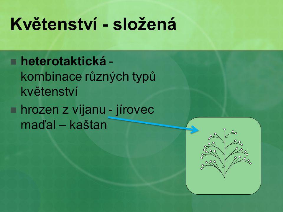 Květenství - složená heterotaktická - kombinace různých typů květenství hrozen z vijanu - jírovec maďal – kaštan