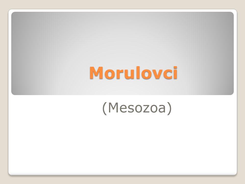 Morulovci (Mesozoa)
