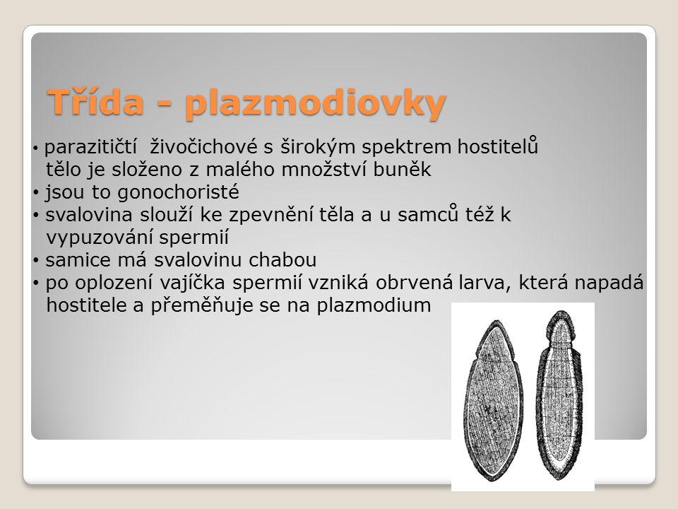 Třída - plazmodiovky parazitičtí živočichové s širokým spektrem hostitelů tělo je složeno z malého množství buněk jsou to gonochoristé svalovina slouž